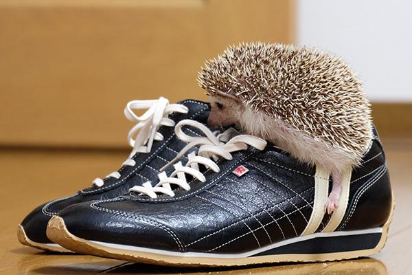 靴に入るの?