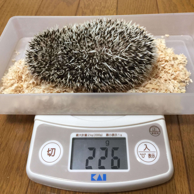 ふくまるの体重が激減…